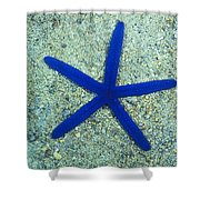 Blue Sea Star Or Starfish On Sand Shower Curtain