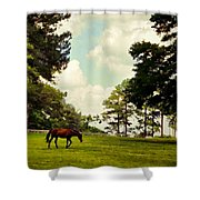 Blue Skies And Pines Shower Curtain