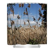 Blue Sky And Seaoats Shower Curtain