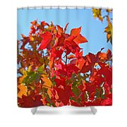 Blue Sky Autumn Art Prints Colorful Fall Tree Leaves Baslee Shower Curtain