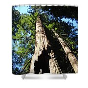 Blue Sky Big Redwood Trees Forest Art Prints Baslee Troutman Shower Curtain