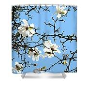 Blue Sky Floral Art White Magnolia Tree Shower Curtain