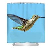 Blue Sky Hummingbird Shower Curtain