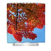 Blue Sky Red Autumn Leaves Sunlit Orange Baslee Troutman  Shower Curtain