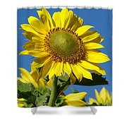 Blue Sky Sunflower Day Shower Curtain