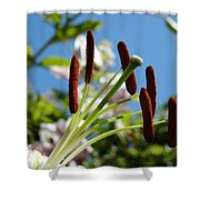 Blue Sky Sunny Floral Pink Lily Flower Baslee Troutman Shower Curtain