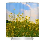 Blue Sky Yellow Flowers Shower Curtain