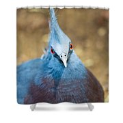 Blue Stare Shower Curtain