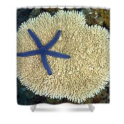 Blue Starfish Shower Curtain