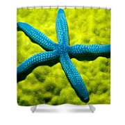Blue Starfish On Poritirs Shower Curtain