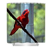 Blue-streaked Lory Shower Curtain