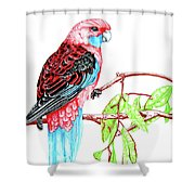 Blue Tail Parrot - Green Day Shower Curtain
