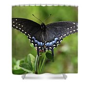 Blue Tailed Black Butterfly Shower Curtain