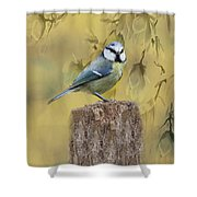 Blue Tit Bird II Shower Curtain