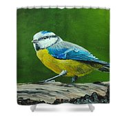 Blue Tit Bird Shower Curtain