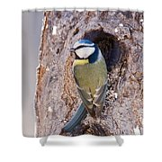 Blue Tit Leaving Nest Shower Curtain by Cliff Norton