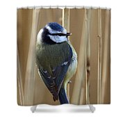 Blue Tit On Reed Shower Curtain