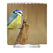 Blue Tit Perched Shower Curtain