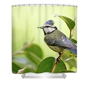 Blue Tit With Caterpillar Shower Curtain