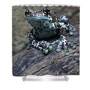 Blue Tree Frog Shower Curtain