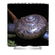 Blue Tree Snail Shower Curtain