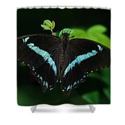 Blue Triangle Butterfly Shower Curtain