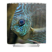 Blue Tropical Fish Shower Curtain