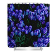 Blue Tulips Shower Curtain