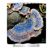 Blue Turkeytail Fungi Shower Curtain