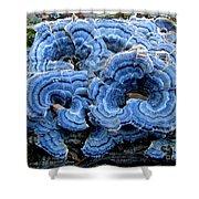 Blue Turkeytail  Shower Curtain by Joshua Bales
