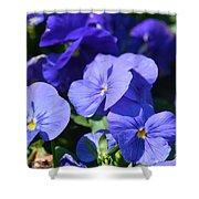 Blue Violets Shower Curtain