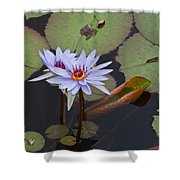 Blue Water Lilies Of Belize Shower Curtain