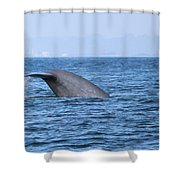Blue Whale Tail Flop Shower Curtain