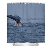 Blue Whale Tail Shower Curtain