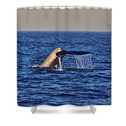 Blue Whales Tail Shower Curtain