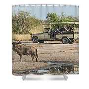 Blue Wildebeest Beside Puddle With Jeep Behind Shower Curtain