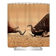 Blue Wildebeest Sparring With Red Hartebeest Shower Curtain