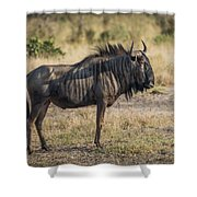 Blue Wildebeest Standing On Savannah Staring Ahead Shower Curtain