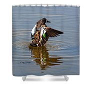 Blue Winged Teal 4 Shower Curtain