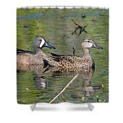 Male And Female Blue-winged Teal  Shower Curtain