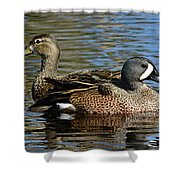 Blue Winged Teal Pair Shower Curtain