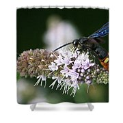 Blue-winged Wasp On Mint Shower Curtain
