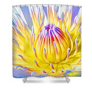 Blue Yellow Lily  Shower Curtain