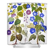 Bluebell And Morning Glory Shower Curtain