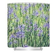 Bluebell Bluebells Flowers Blooming In Spring Shower Curtain