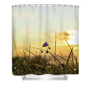 Bluebell In The Sunrise Shower Curtain