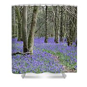 Bluebell Wood Effingham Surrey Uk Shower Curtain