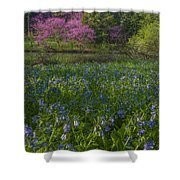 Bluebells And Redbuds Shower Curtain