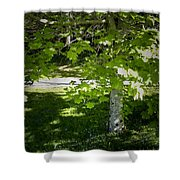 Bluebells In Killarney National Park Ireland Shower Curtain