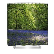 Bluebells Shower Curtain